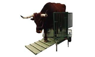 Sistema de pesaje de ganado | Básculas Samsó